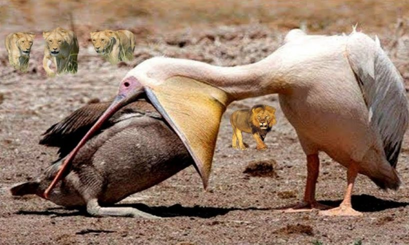 Unbelievable Animals Fight | Biggest Animal Fights | Wild Discovery Channel Animals