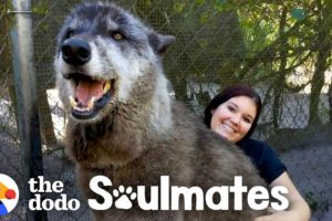 Wolf Dog Who Growls At Everyone Else Snuggles With His Best Friend   The Dodo Soulmates
