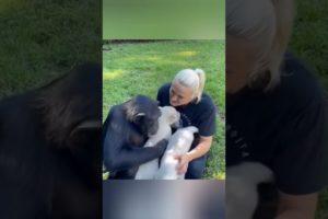amazing animal #shorts Video Guru 20211013 134531437