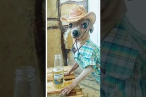 #chihuahua #funnyvideo  #shorts #playfulpets #animals #dogs #hood fights #short