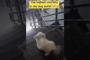 #funnypetvideos #hood fights #pets #funny #shorts #playfulpets #animals