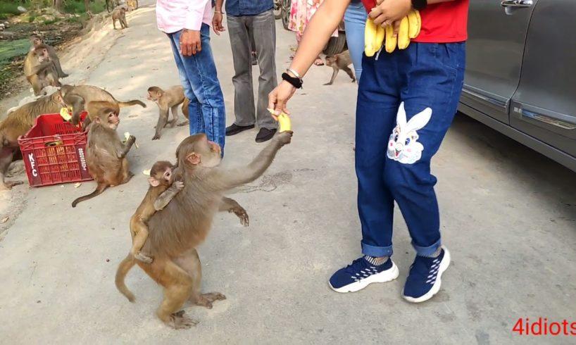 kese log hai bina kisi wajah se hi animals ko marte rehte hai. save the animals and food animals
